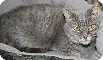 Domestic Shorthair Cat for adoption in Red Deer, Alberta - Missy