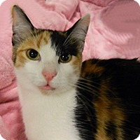 Adopt A Pet :: Winifred - The Colony, TX
