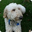 Adopt A Pet :: Sam