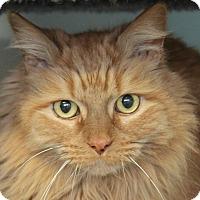 Adopt A Pet :: Charlie - North Branford, CT