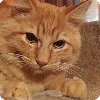 Adopt A Pet :: Viktor - Ennis, TX