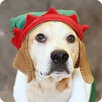 Adopt A Pet :: Peanut - Rockville, MD