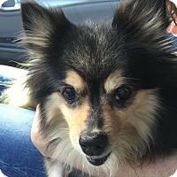 Adopt A Pet :: Chaquita - Windermere, FL