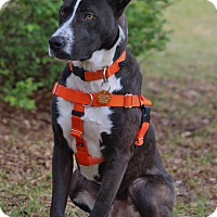 Adopt A Pet :: Wilbur-Adoption Pending - Pinehurst, NC