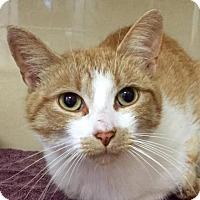 Adopt A Pet :: Jen - Lincolnton, NC