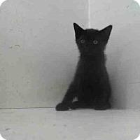 Adopt A Pet :: A352298 - Orlando, FL