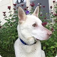 Adopt A Pet :: Hershel D160768: PENDING ADOPTION - Edina, MN