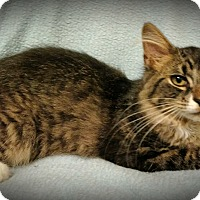 Adopt A Pet :: Dexter - Fairborn, OH
