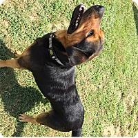 Adopt A Pet :: Cletus - Irmo, SC