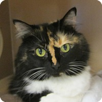 Adopt A Pet :: Princess - Kingston, WA