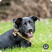 Adopt A Pet :: Razcal - Princeton, MN