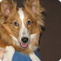 Adopt A Pet :: Paige - Stony Brook, NY