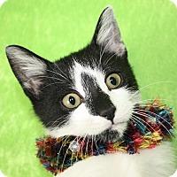 Adopt A Pet :: Arnold - Jackson, MI