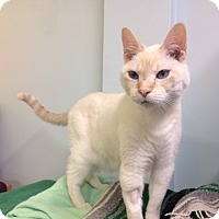 Adopt A Pet :: Malfoy - Chicago, IL