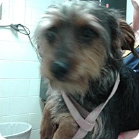 Adopt A Pet :: Farley - Fayetteville, WV