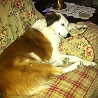 Adopt A Pet :: Delightful Daisy - Austin, TX