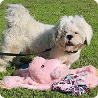 Adopt A Pet :: Loki - Winters, CA