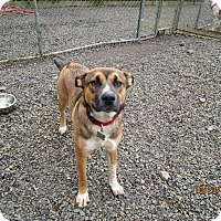 Shepherd (Unknown Type)/Australian Cattle Dog Mix Dog for adoption in Tillamook, Oregon - Wiley