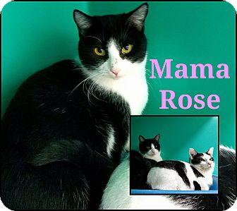 Domestic Shorthair Cat for adoption in California City, California - Mama Rose & Daffodil