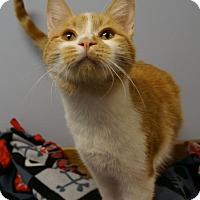 Adopt A Pet :: Leo - Verona, WI