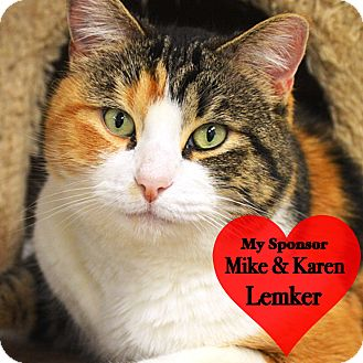 Calico Cat for adoption in San Leon, Texas - June Bug