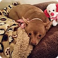 Adopt A Pet :: Monkey - Gulfport, MS