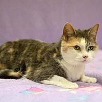 Adopt A Pet :: Lady - mishawaka, IN