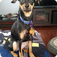 Adopt A Pet :: Donner - Valparaiso, IN