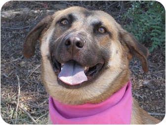 German Shepherd Dog Mix Dog for adoption in Encinitas, California - Faith