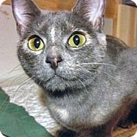 Adopt A Pet :: Mena - O'Fallon, MO