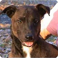Terrier (Unknown Type, Medium) Mix Dog for adoption in Tyler, Texas - AA-Anabel