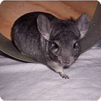 Adopt A Pet :: Ty - Avondale, LA