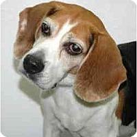 Adopt A Pet :: Munch - Port Washington, NY