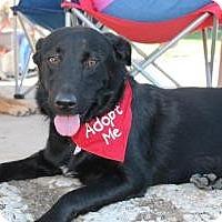 Adopt A Pet :: Juli - Justin, TX