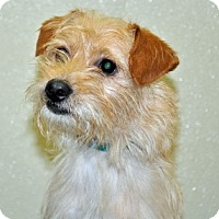 Adopt A Pet :: Albie - Port Washington, NY