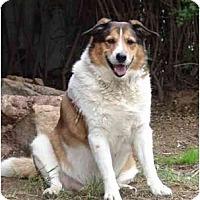 Adopt A Pet :: Rascal - San Diego, CA