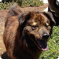 Adopt A Pet :: Brandi - Sacramento, CA
