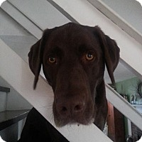 Adopt A Pet :: Bruin - Lewisville, IN