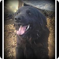 Adopt A Pet :: Luna - Indian Trail, NC