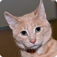 Adopt A Pet :: Brett - Medina, OH