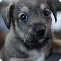 Adopt A Pet :: Davis - Minneapolis, MN