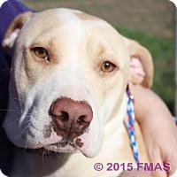 Adopt A Pet :: Glen 0854/Bay Area Foster - Madera, CA