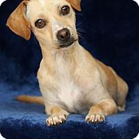 Adopt A Pet :: Sally - Yucaipa, CA