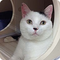 Adopt A Pet :: King -may be adopted separate - Merrifield, VA