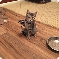 Adopt A Pet :: Wanda Maximof - Putnam, CT