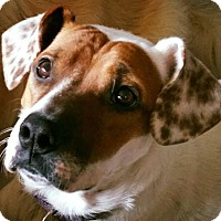 Adopt A Pet :: Karmel-Sutra - Grafton, WI
