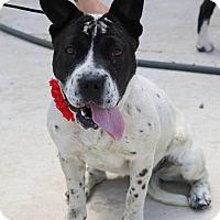 Adopt A Pet :: Delilah - Pluckemin, NJ