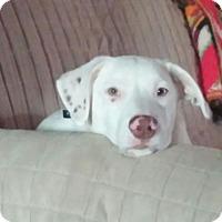 Adopt A Pet :: Van Bellamy - Huntsville, AL