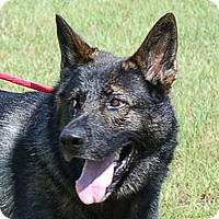 Adopt A Pet :: Jaxon AD 09-24-16 - Preston, CT