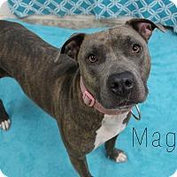 Adopt A Pet :: Magenta - Melbourne, KY